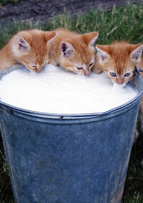 可愛い猫画像ブログ(1176)