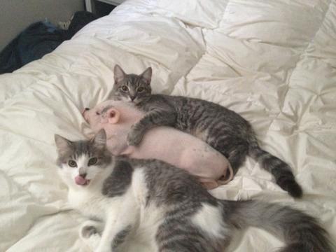 可愛い猫画像ブログ(1346)