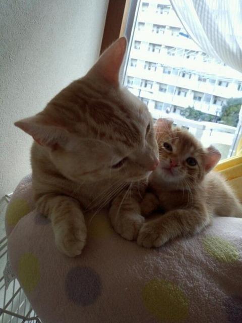 可愛い猫画像ブログ(1254)