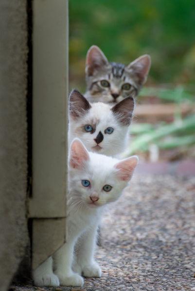 可愛い猫画像ブログ(1127)