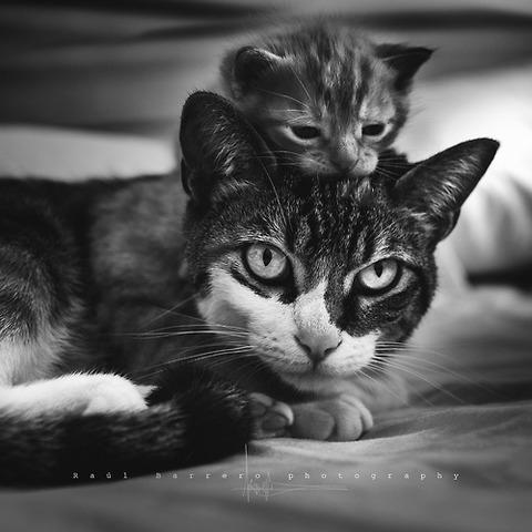 可愛い猫画像ブログ(1206)