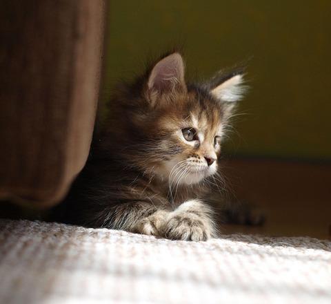 可愛い猫画像ブログ(1311)