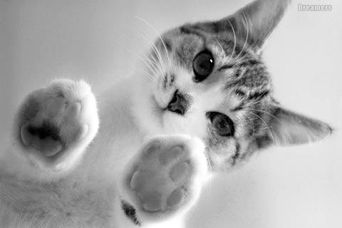 可愛い猫画像ブログ(961)