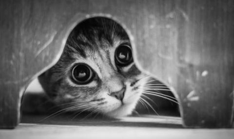 可愛い猫画像ブログ(992)