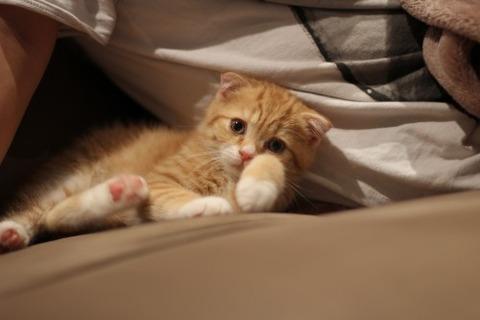 可愛い猫画像ブログ(1256)