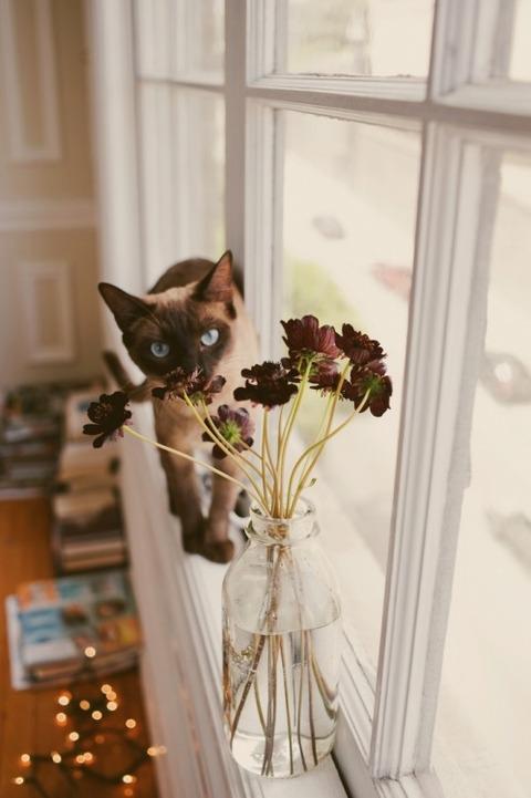 可愛い猫画像ブログ(1257)