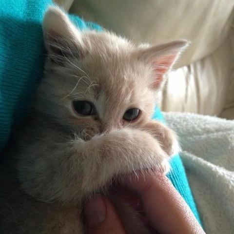可愛い猫画像ブログ(1187)