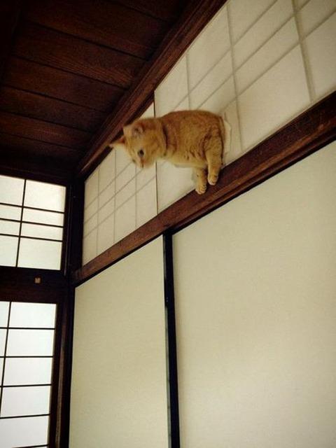 可愛い猫画像ブログ(1202)