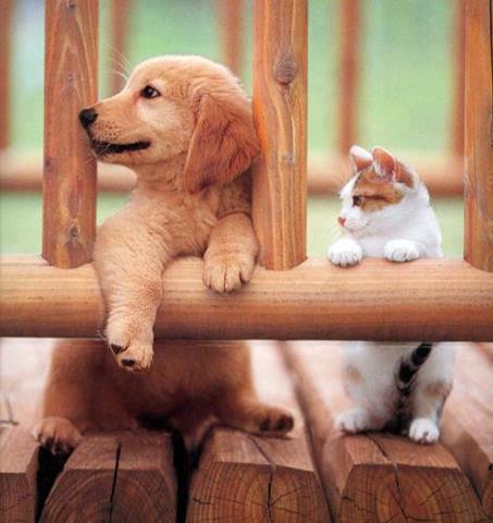 可愛い猫画像ブログ(984)