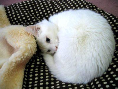 可愛い猫画像ブログ(1144)
