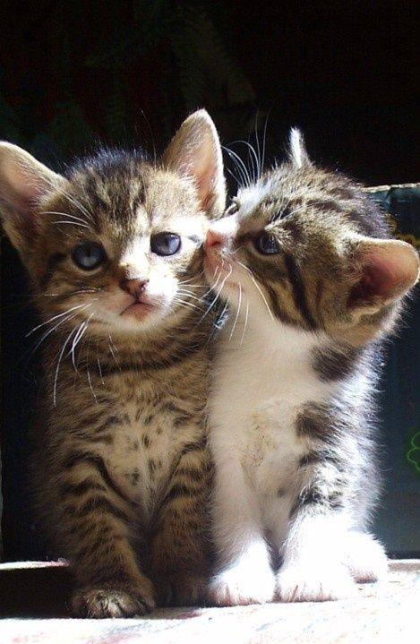 可愛い猫画像ブログ(1035)