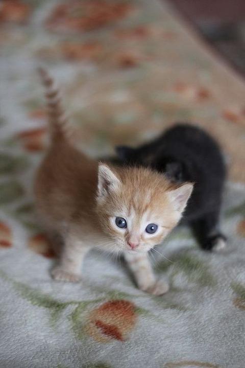 可愛い猫画像ブログ(1147)