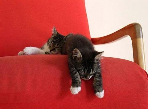 可愛い猫画像ブログ(964)