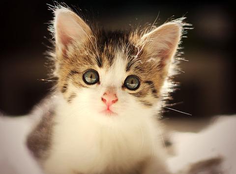可愛い猫画像ブログ(1224)
