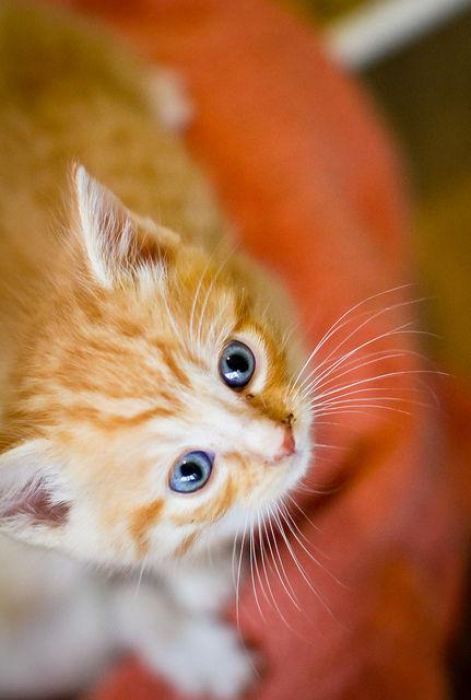 可愛い猫画像ブログ(1323)