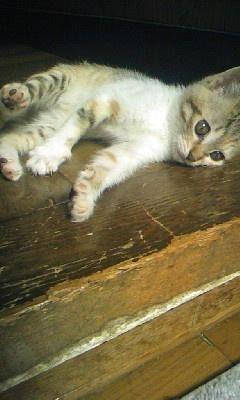 可愛い猫画像ブログ(1243)