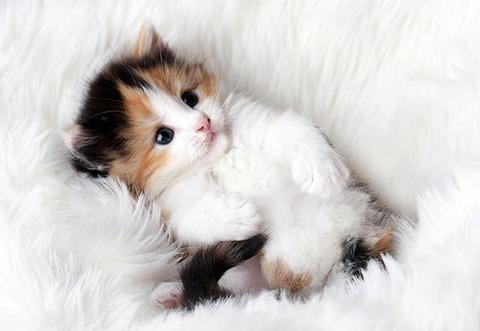 可愛い猫画像ブログ(1309)