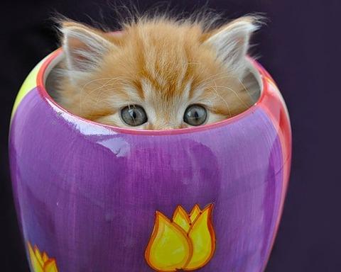 可愛い猫画像ブログ(1229)