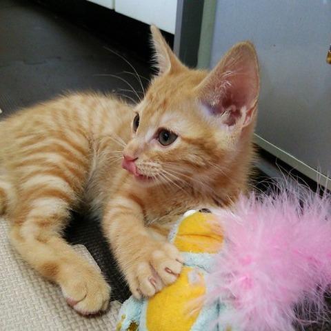 可愛い猫画像ブログ(1083)