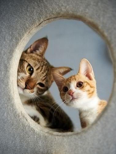 可愛い猫画像ブログ(1200)