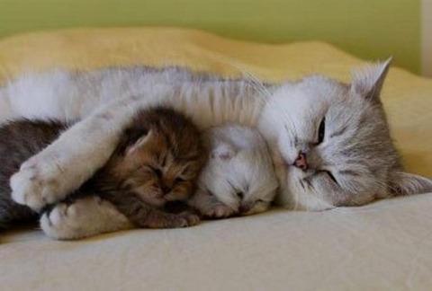 可愛い猫画像ブログ(760)
