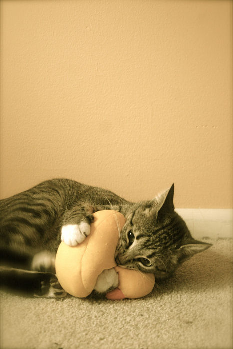 可愛い猫画像ブログ(1153)