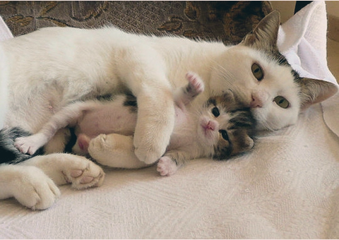 可愛い猫画像ブログ(1049)