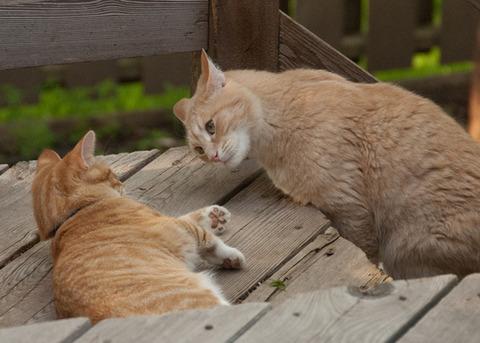 可愛い猫画像ブログ(1063)