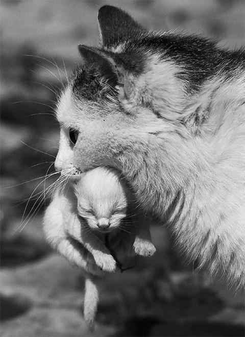 可愛い猫画像ブログ(1217)