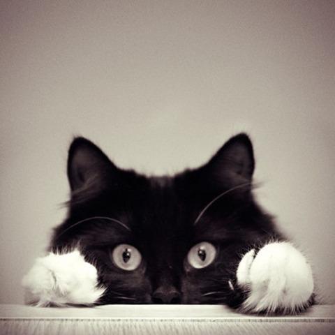 可愛い猫画像ブログ(1310)