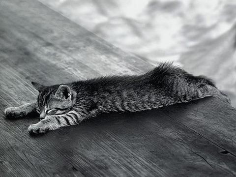 可愛い猫画像ブログ(832)