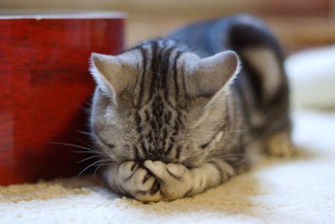 可愛い猫画像ブログ(1344)
