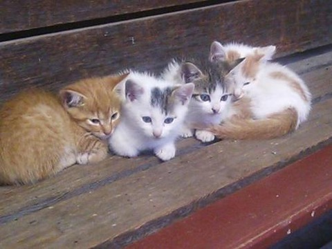 可愛い猫画像ブログ(1087)