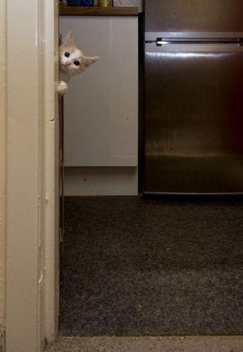 可愛い猫画像ブログ(750)