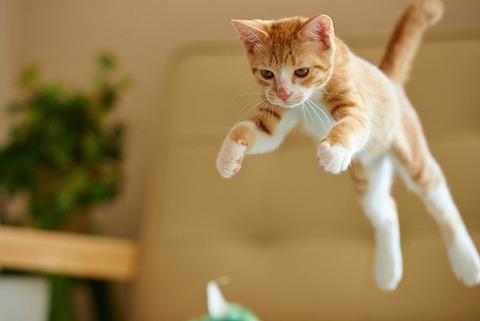 可愛い猫画像ブログ(1119)