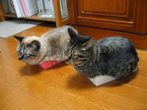 可愛い猫画像ブログ(1317)