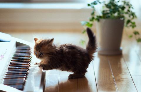可愛い猫画像ブログ(1280)