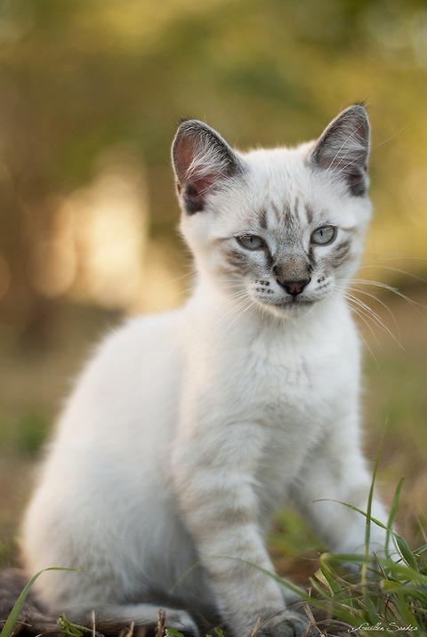 可愛い猫画像ブログ(1165)