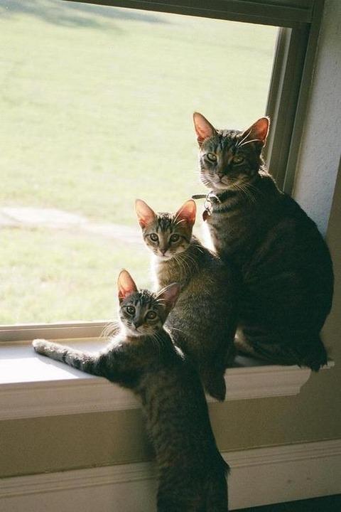 可愛い猫画像ブログ(1186)