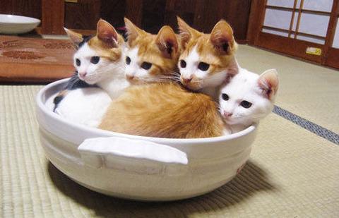 可愛い猫画像ブログ(793)