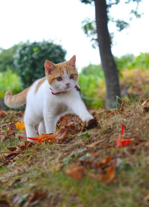 可愛い猫画像ブログ(1318)