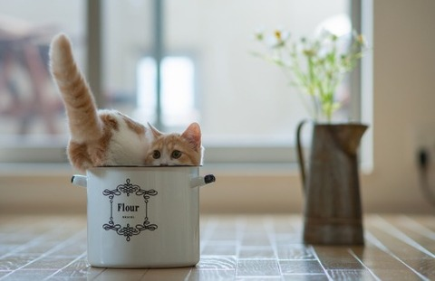 可愛い猫画像ブログ(1269)