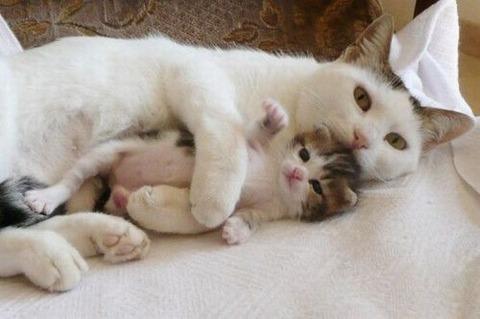 可愛い猫画像ブログ(999)