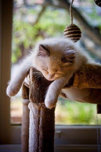 可愛い猫画像ブログ(1299)
