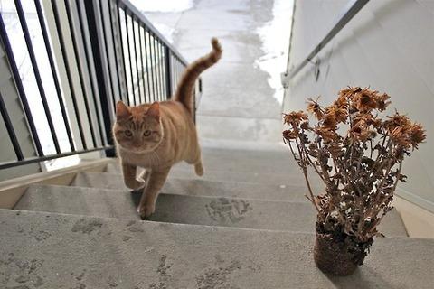 可愛い猫画像ブログ(1314)