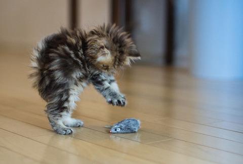 可愛い猫画像ブログ(1313)