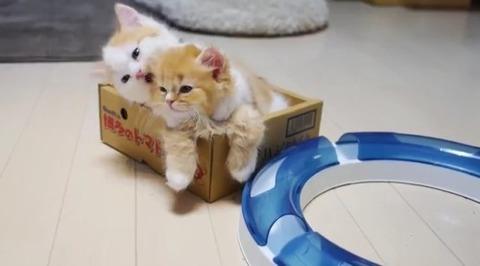 可愛い猫画像ブログ(1245)