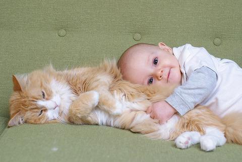 可愛い猫画像ブログ(1020)