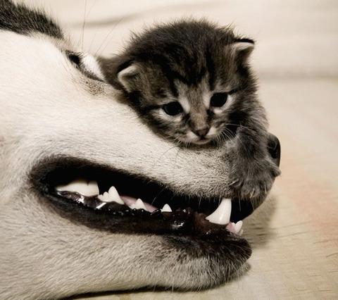 可愛い猫画像ブログ(763)