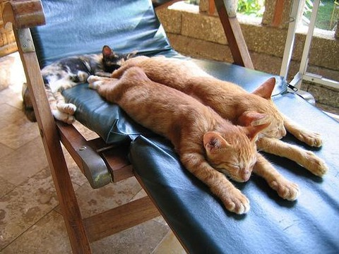 可愛い猫画像ブログ(1161)